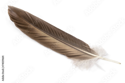 Fototapete feather