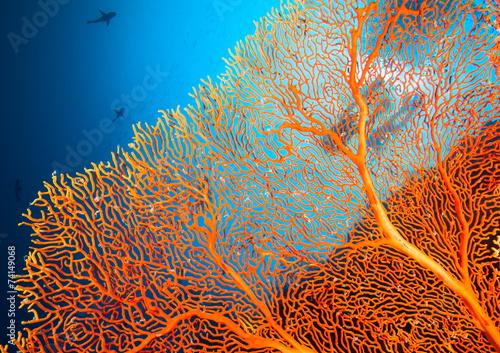 Cuadros en Lienzo Un par de buzos en el arrecife de coral