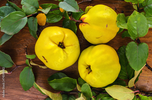 Tableau sur Toile Three yellow ripe quince with leaves
