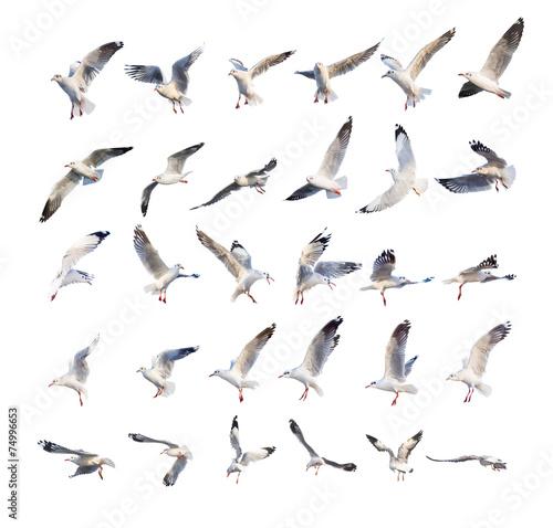 flying seagull actions isolated on white Fototapeta