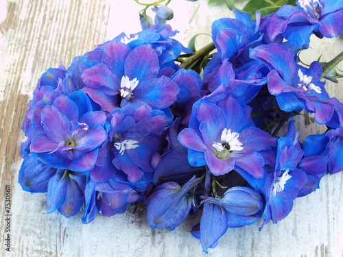 Tableau sur Toile Blue Delphinium Flowers