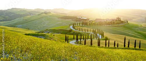 Obraz na plátně Sunny fields in Tuscany, Italy