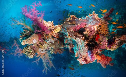 Cuadros en Lienzo Tropical Anthias fish with net fire corals