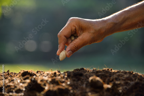 Wallpaper Mural Farmer's hand planting a seed in soil