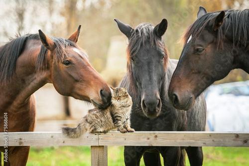 Fototapeta Tři koně a kočky