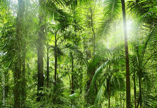 Fototapeta Tropikalna dżungla i promienie słońca
