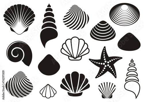 Fototapeta Sea shells and starfish