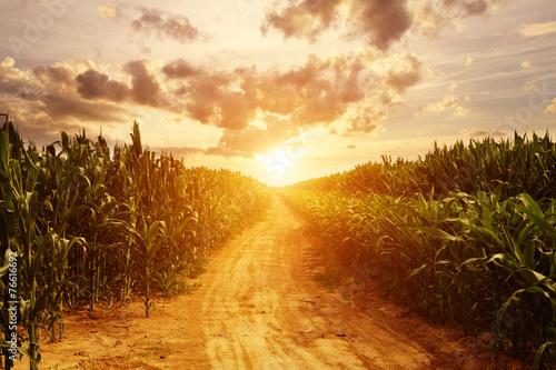 Photo skyline and corn field