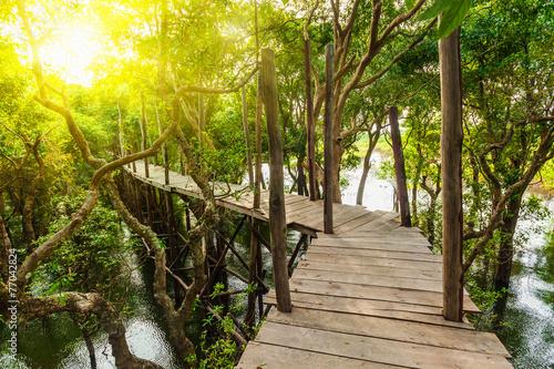 Drewniany most w zalanej dżungli lasów tropikalnych drzew namorzynowych
