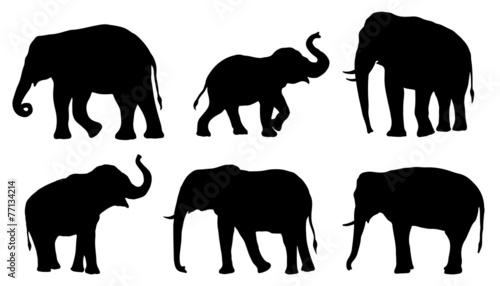 Fototapeta premium sylwetki słonia