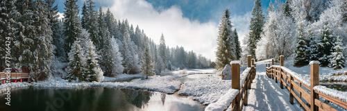 Zimowy las w Karpatach