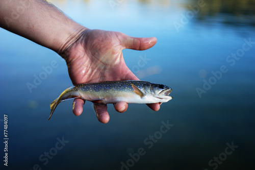 Photographie Brook Trout(Salvelinus fontinalis) in hand