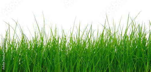 Green grass on white background #78059434