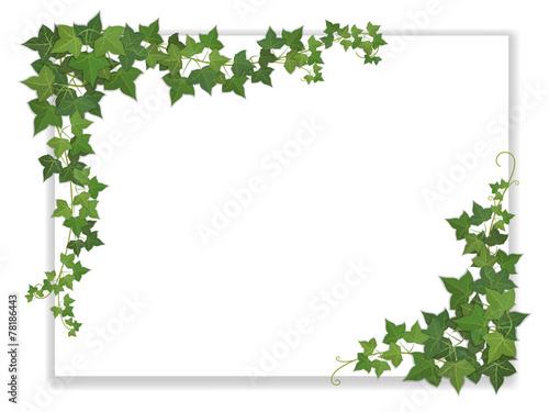 Fotografia paper sheet decorated ivy