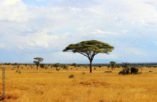 Fototapeta Savanna landscape