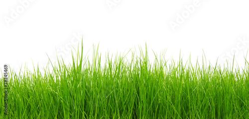 Green grass on white background