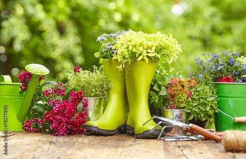 Fotografia, Obraz Outdoor gardening tools on old wood table