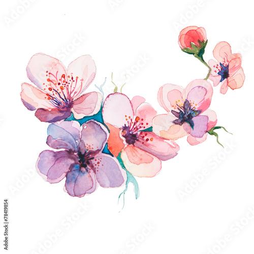 wiosenne kwiaty akwarele na białym tle