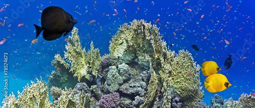 Coral reef scene #78574673