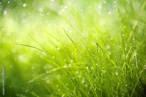 Fototapeta premium Poranna rosa na wiosennej trawie