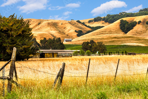 California landscape of golden hills, oak trees and vineyards #78928263