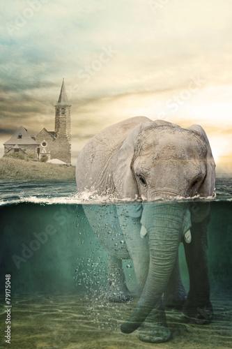 Fotografie, Obraz Elephant in water