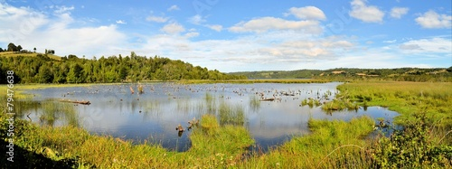 Fotografie, Obraz Pond in marshland on the island of Chiloe, Patagonia, Chile