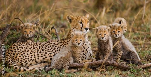Fotografia Samica geparda z młodymi