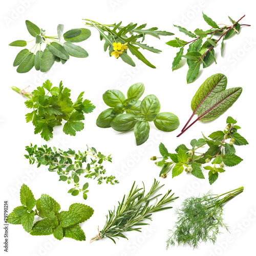 Kitchen herbs collection