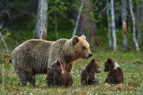 Canvas Print Mother bear and cubs
