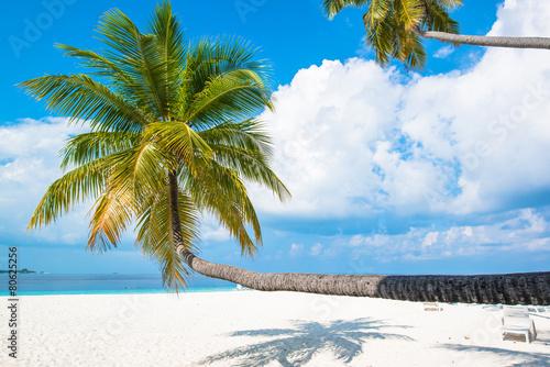 Tropical white sand beach with palm trees Fototapeta