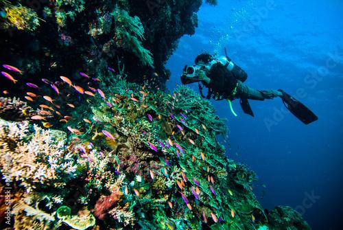 Photo diver photo video seafan kapoposang indonesia scuba diving