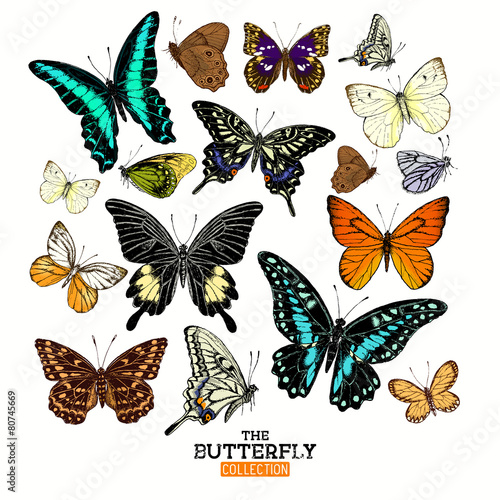 Realistic Butterfly Collection #80745669