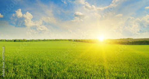 Photo field, sunrise and blue sky