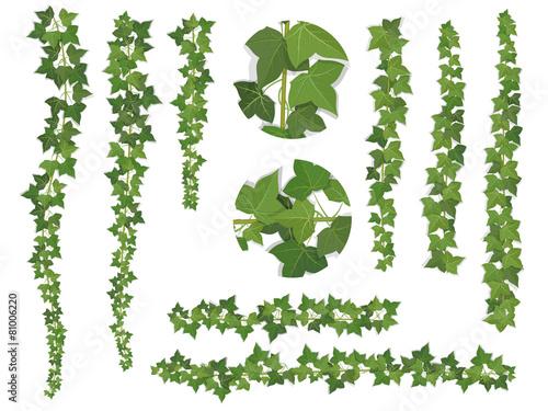 Fotografia, Obraz set of brushes ivy vine branches
