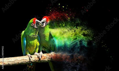 Obraz na płótnie Parrot bird (Severe Macaw)