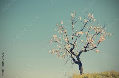Leinwand Poster Eine einzelne Mandelblüte