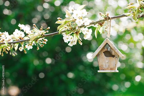 Fotografiet Little Birdhouse in Spring with blossom cherry flower sakura