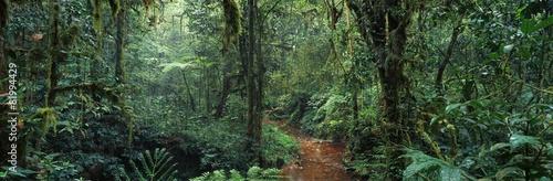 jungle #81994429