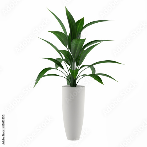 Wallpaper Mural plant isolated in the pot