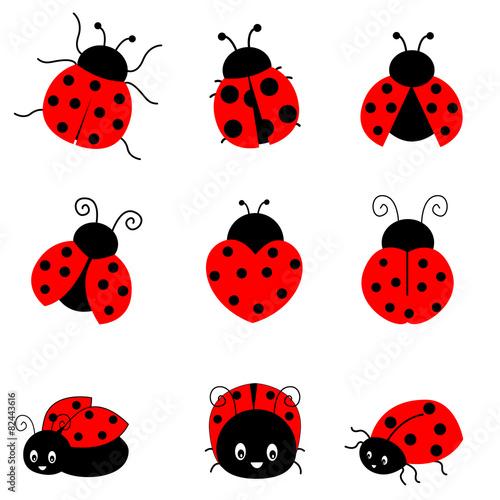 Obraz na płótnie Ladybugs