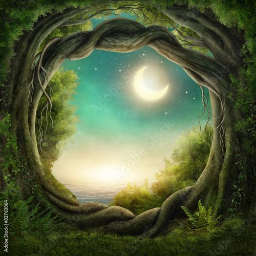 Fototapeta Enchanted temného lesa