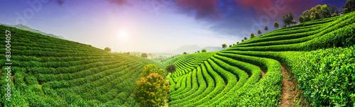 Fotografie, Obraz Tea Plantations under sky