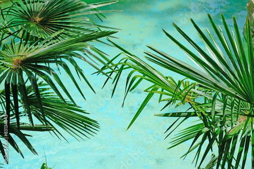 palm by turquoise water
