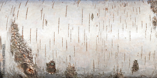 Photo White birch bark, close up background texture