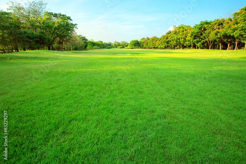 Fototapeta beautiful morning light in public park with green grass field an