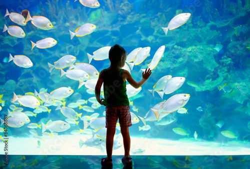 Fotografija little boy, kid watching the shoal of fish in oceanarium