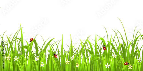 Grass with ladybird isolated on white background