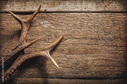 Fotografia Deer Antlers on Wooden Surface