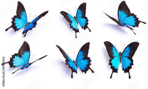 Photo Blue and colorful butterfly on white background